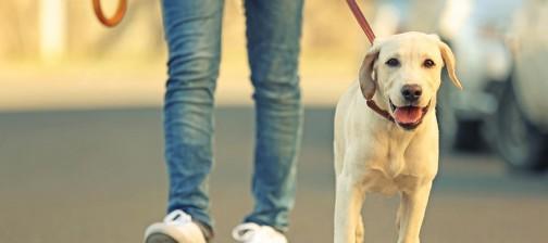 Camminare riduce il colesterolo